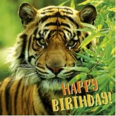 3D wenskaart - Happy birthday - tijger