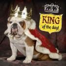 3D wenskaart - Verjaardag -  Verklede hond koning
