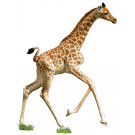 XXL contourpuzzel giraf - I am lil' giraffe